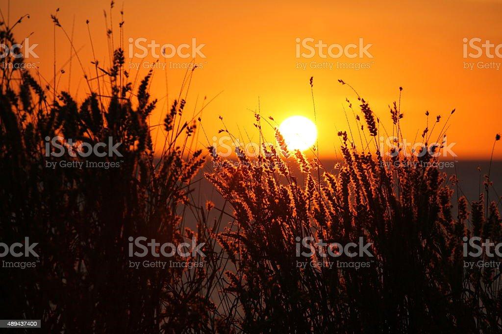 Northern Territory Sunset stock photo