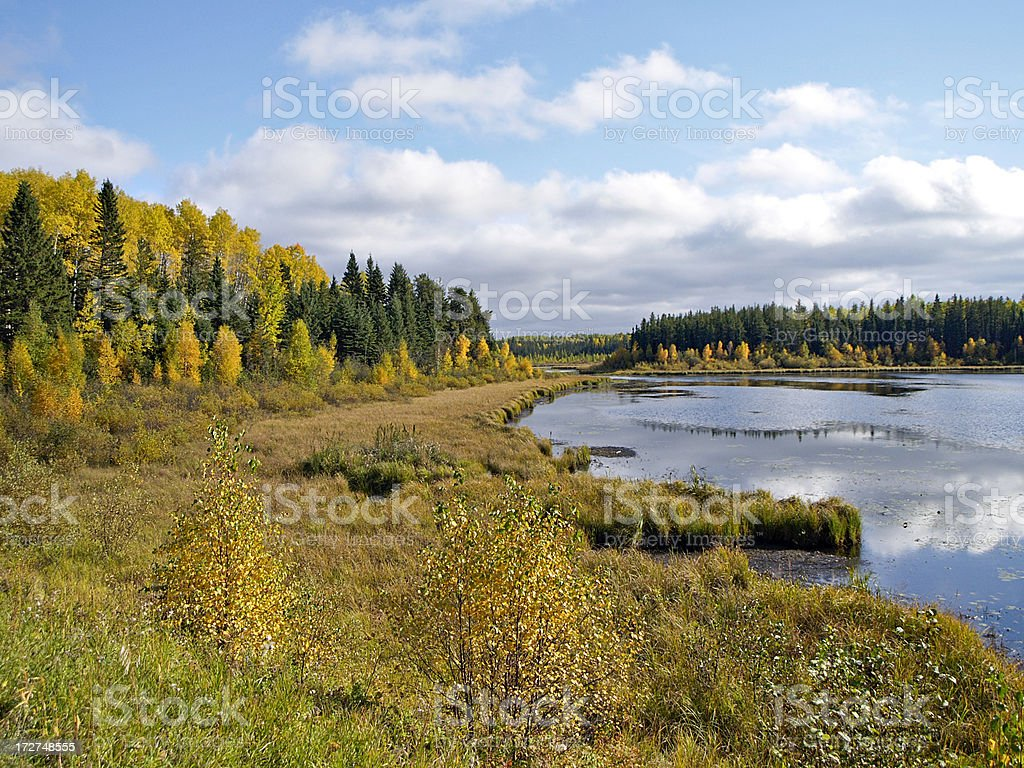 Northern Wetland royalty-free stock photo