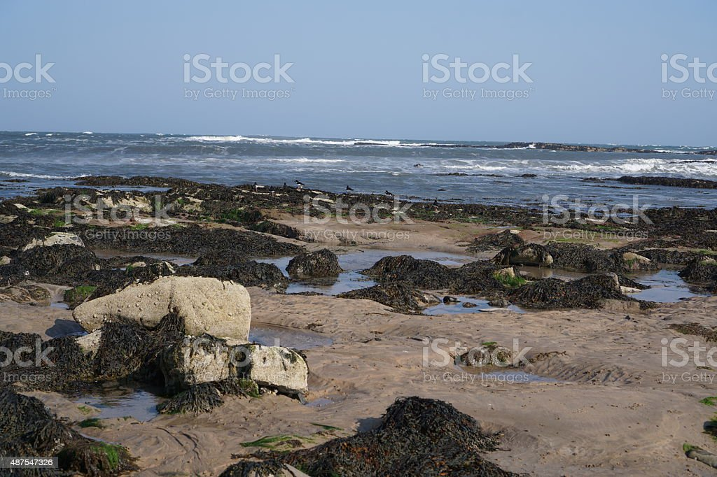Northumberland sea shore stock photo