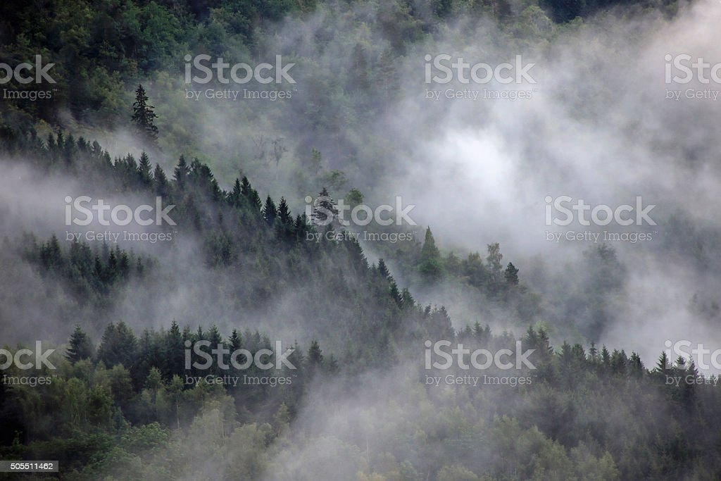 Norway forest in fog stock photo