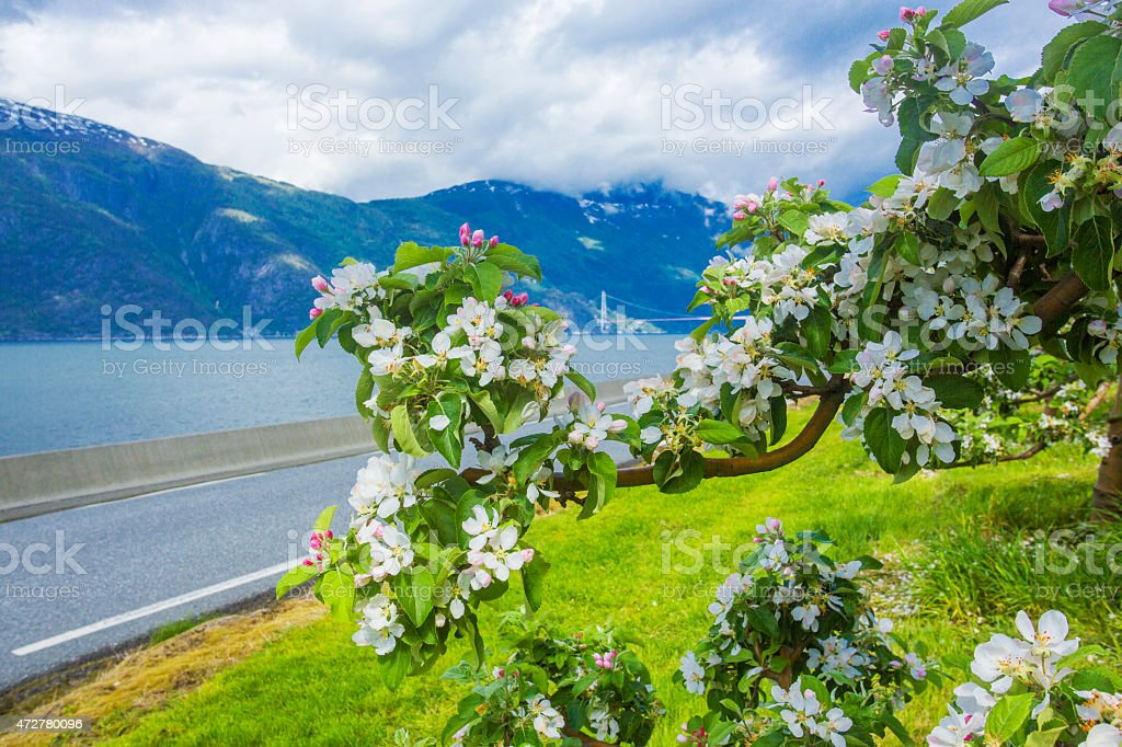 Norway in spring stock photo