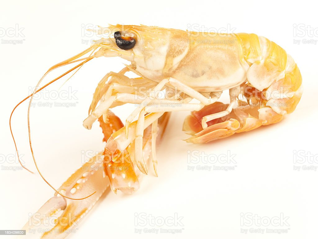Norway lobsters stock photo