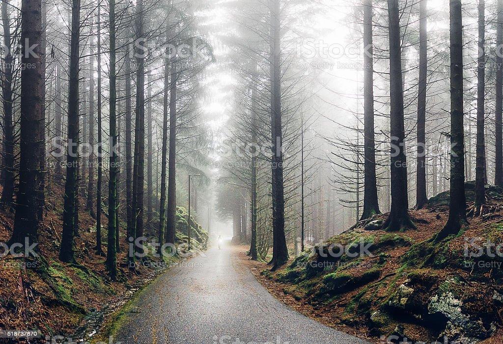 Norwegian forest in fog stock photo