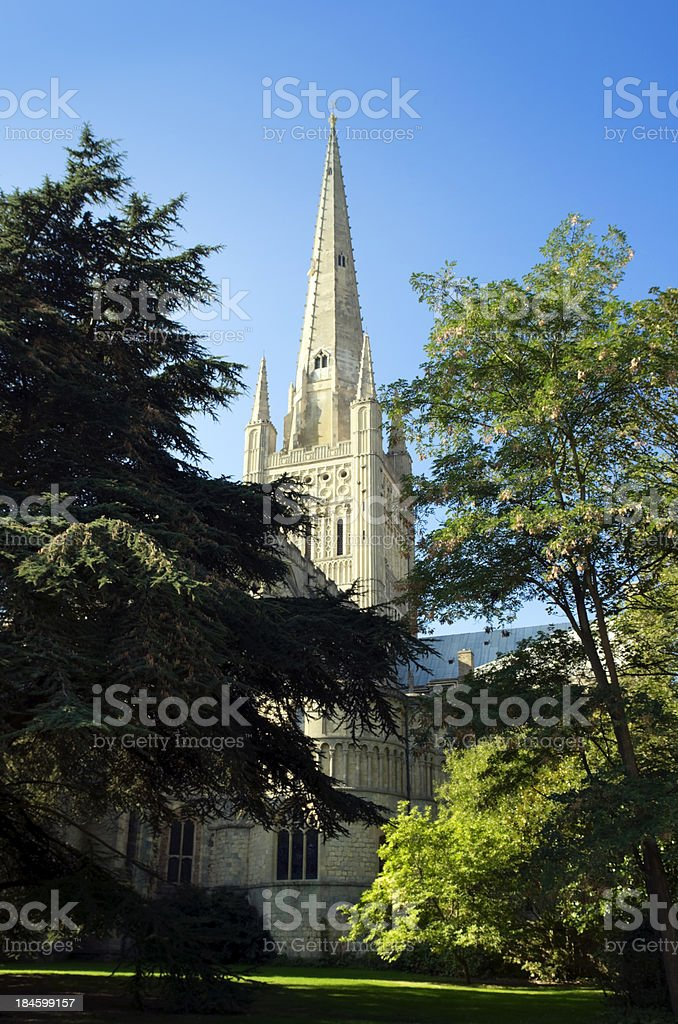 Norwich Cathedral and gardens stock photo