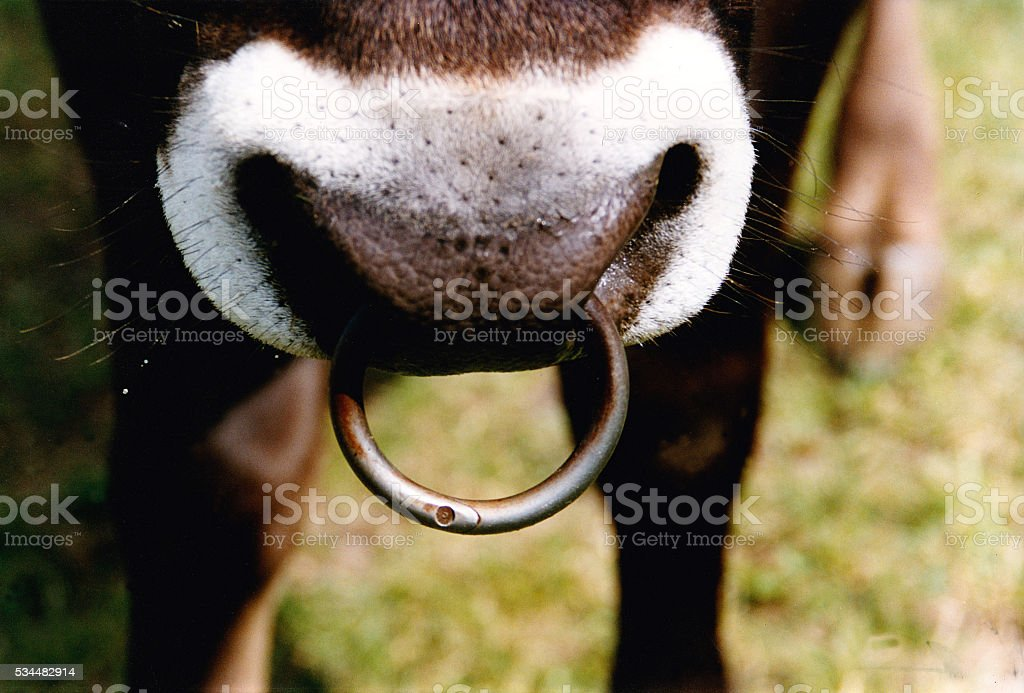 Nose Ring stock photo