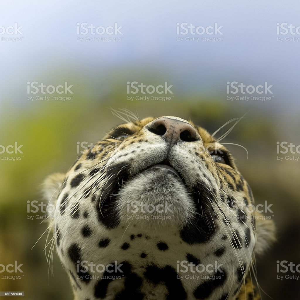 Nose up in the Air royalty-free stock photo