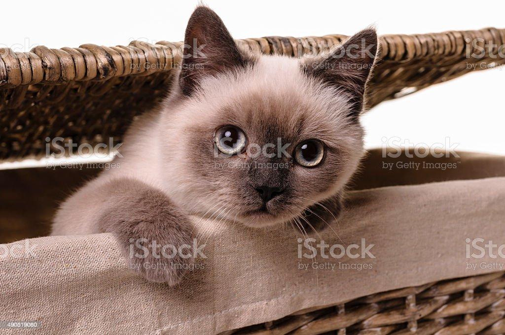 Nosy little cat stock photo