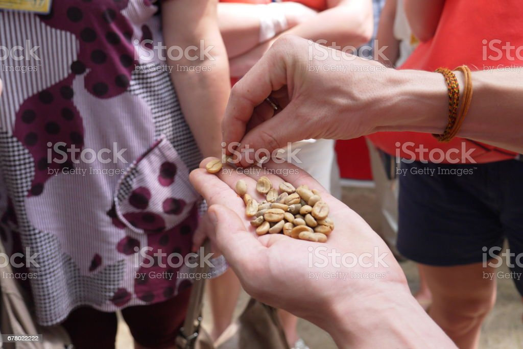 Not fried coffee grains stock photo