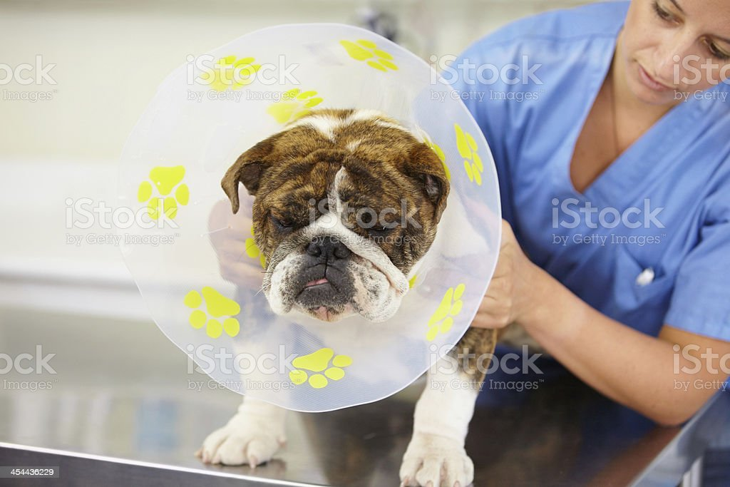 Not happy about his cone... royalty-free stock photo