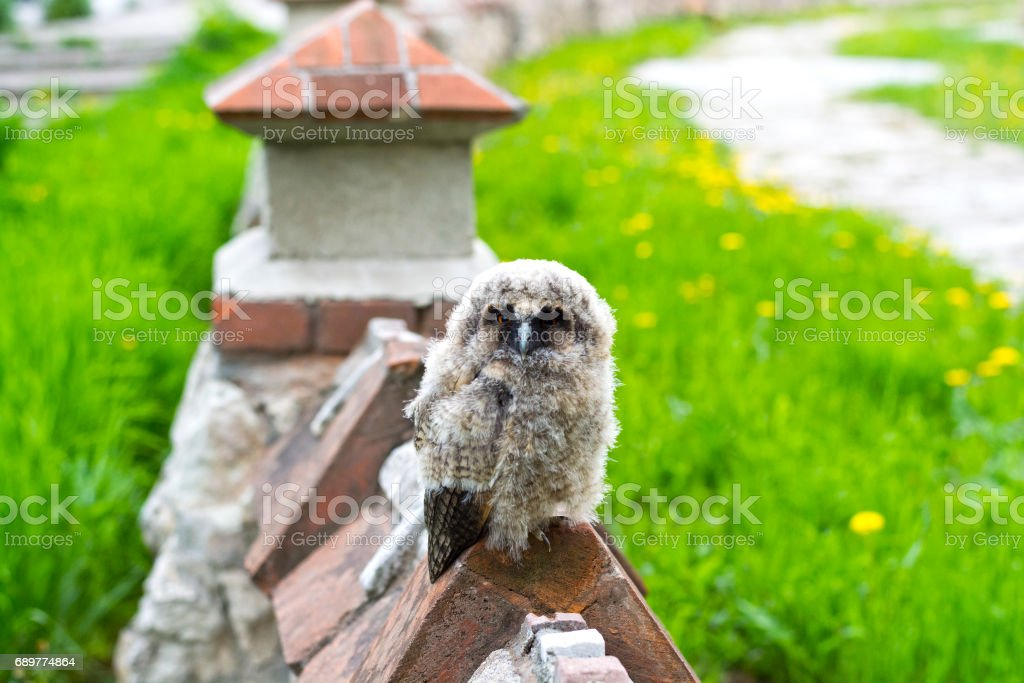 Not too small to be so angry bird stock photo