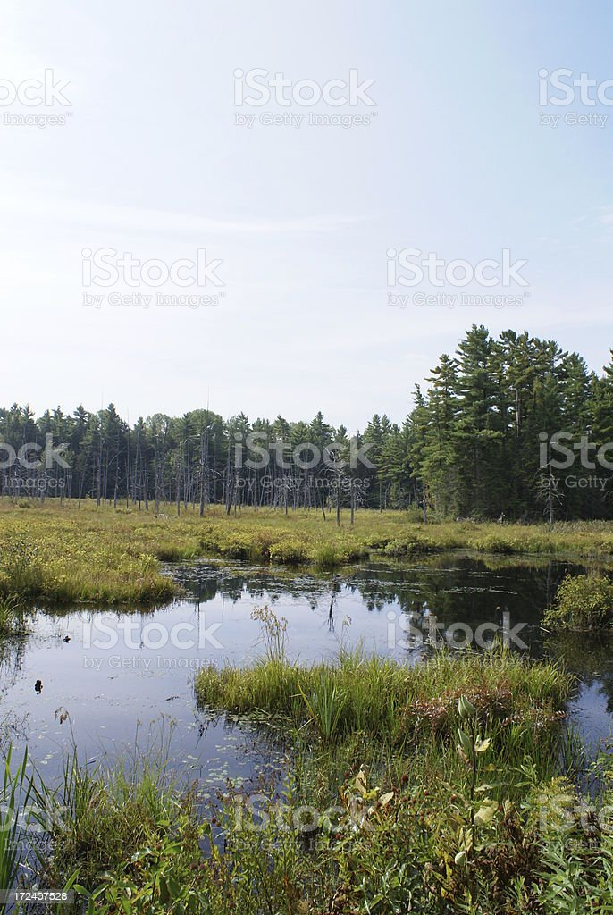 Nothern Canadian Landscape royalty-free stock photo
