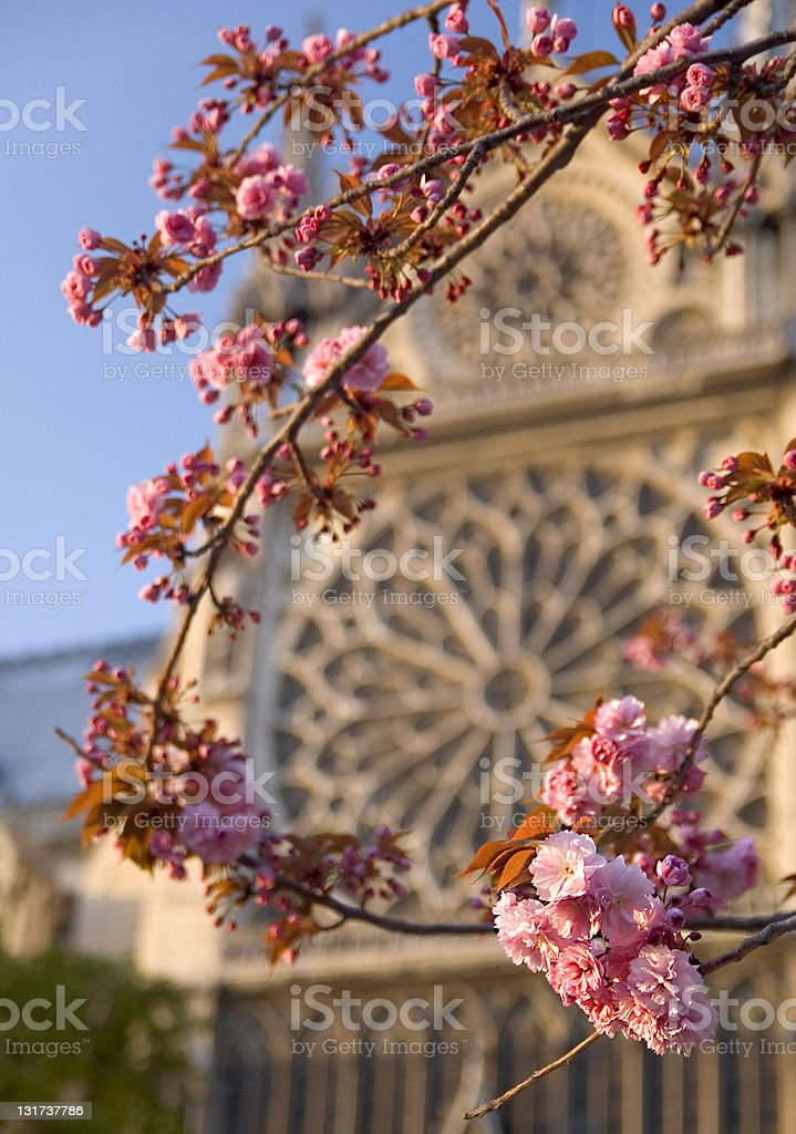 Notre Dame with flower royalty-free stock photo