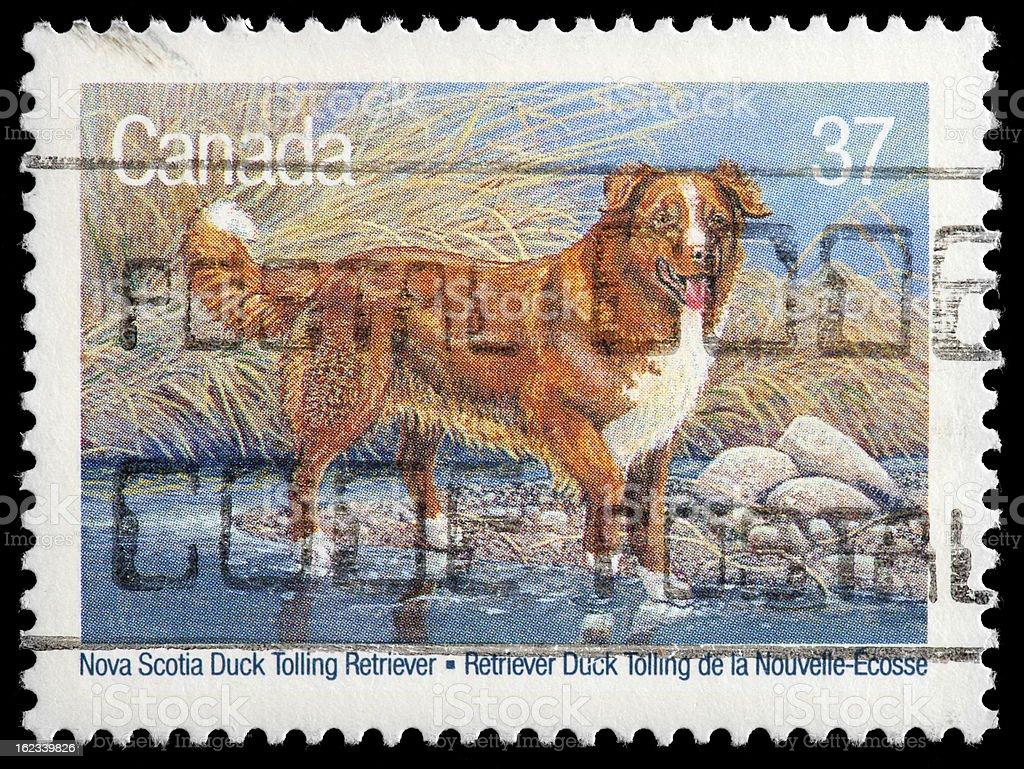 Nova Scotia Duck Tolling Retriever Vintage Postage Stamp stock photo