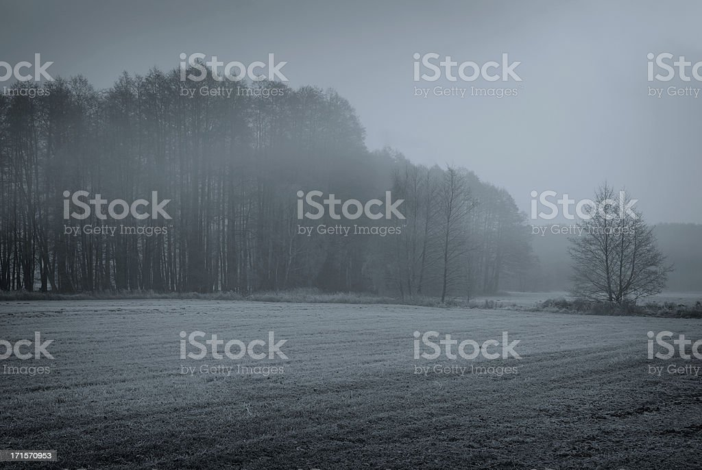 november forest royalty-free stock photo