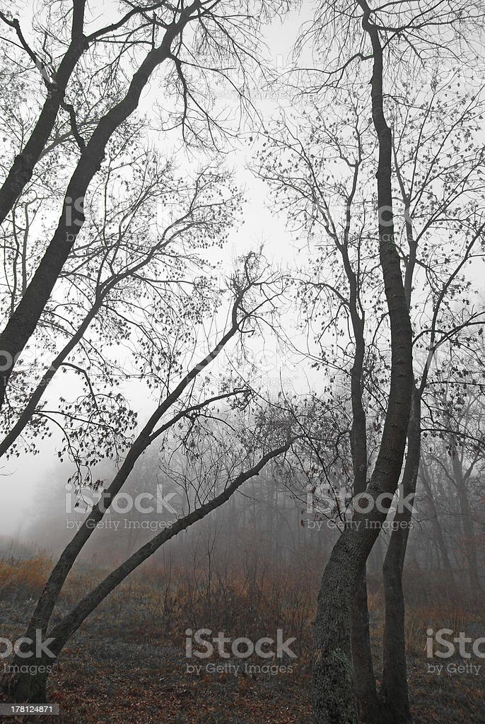 November scenery in the forest royalty-free stock photo