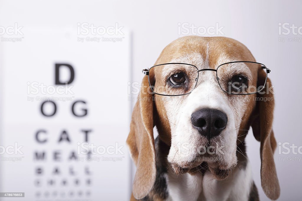 Now I Can See stock photo
