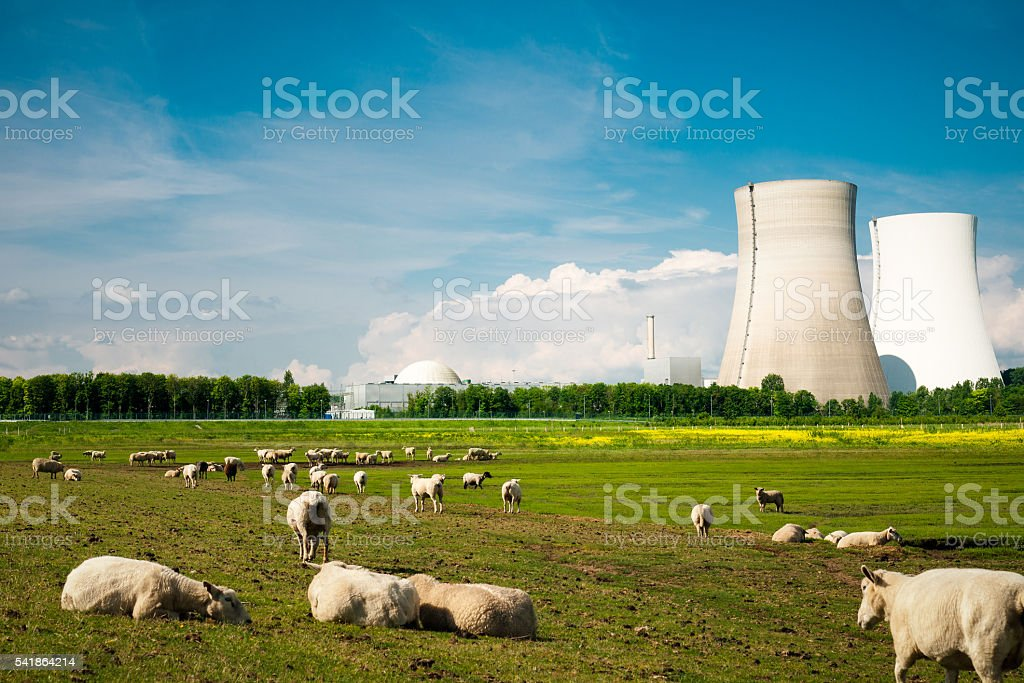 nuclear power plant and sheep stock photo