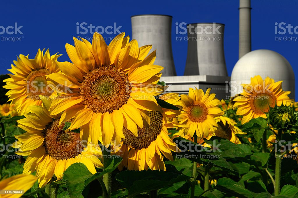 Nuclear power plant behind a sunflower field royalty-free stock photo