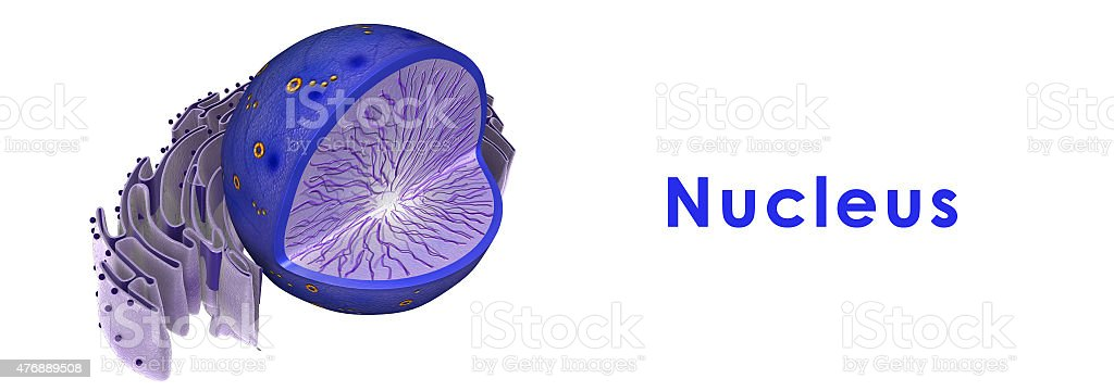 Nucleus of Animal Cell stock photo