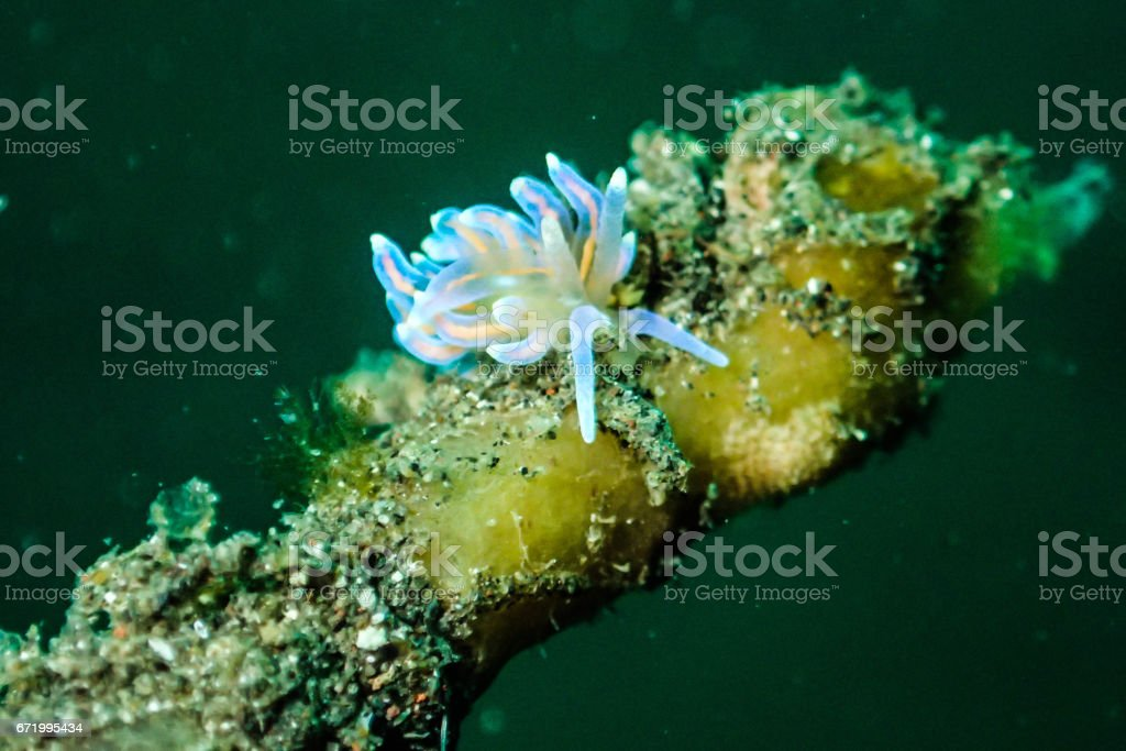 Nudibranch stock photo