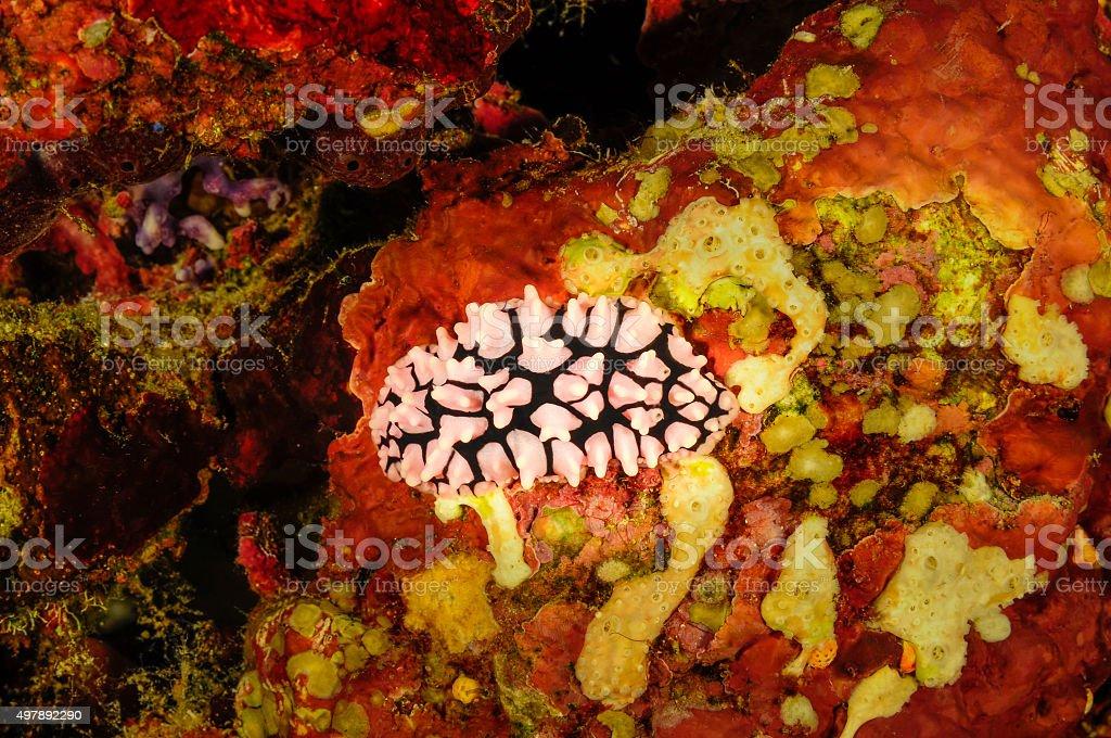 Nudibranchs II stock photo