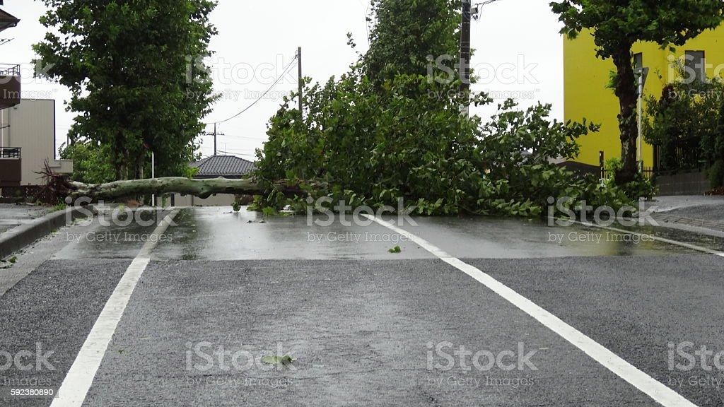 台風9号 被害 Number 9 of typhoon, damage stock photo
