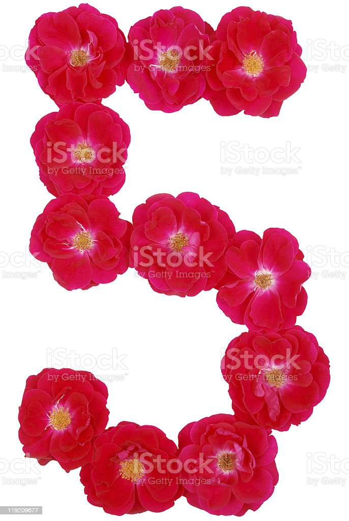 Number five laid out by roses on a white background stock photo