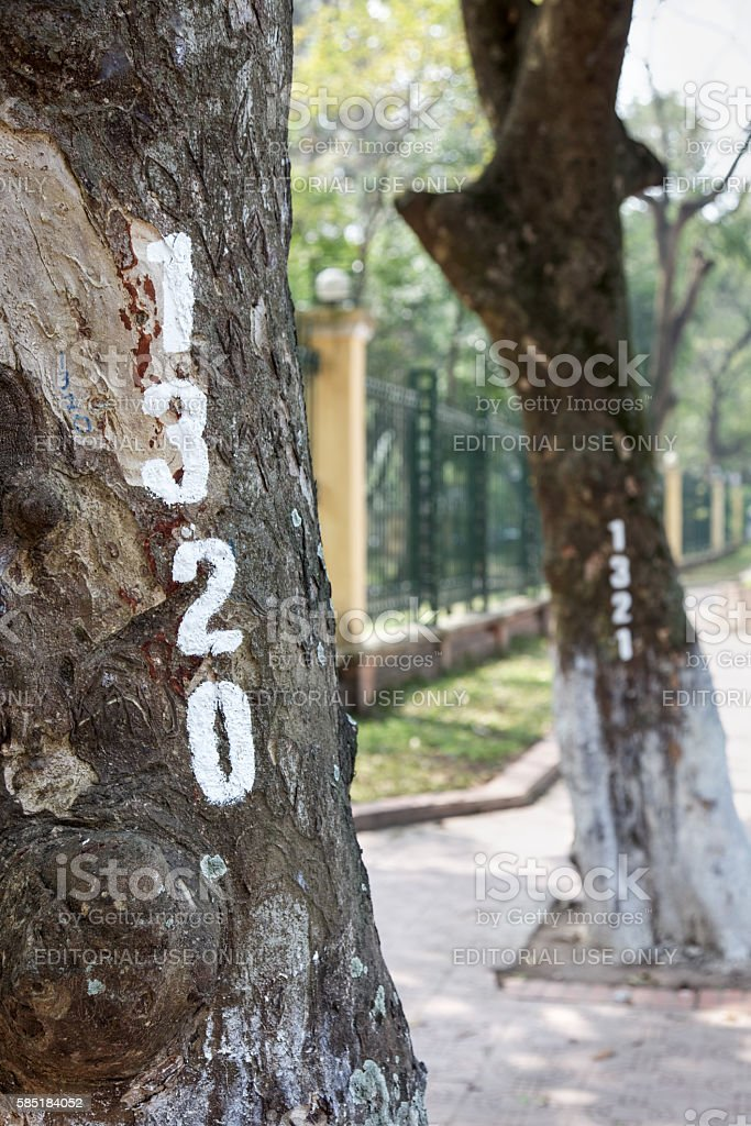 Numbered trees in Hanoi stock photo
