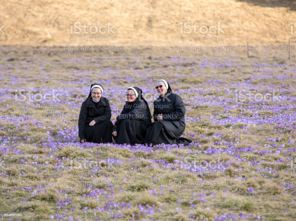 Nuns  on mountain meadow with crocus flowers blooming stock photo