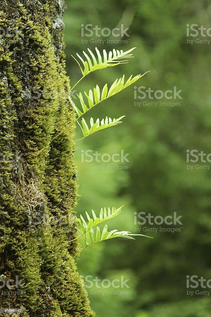 nurseling fern leaves stock photo