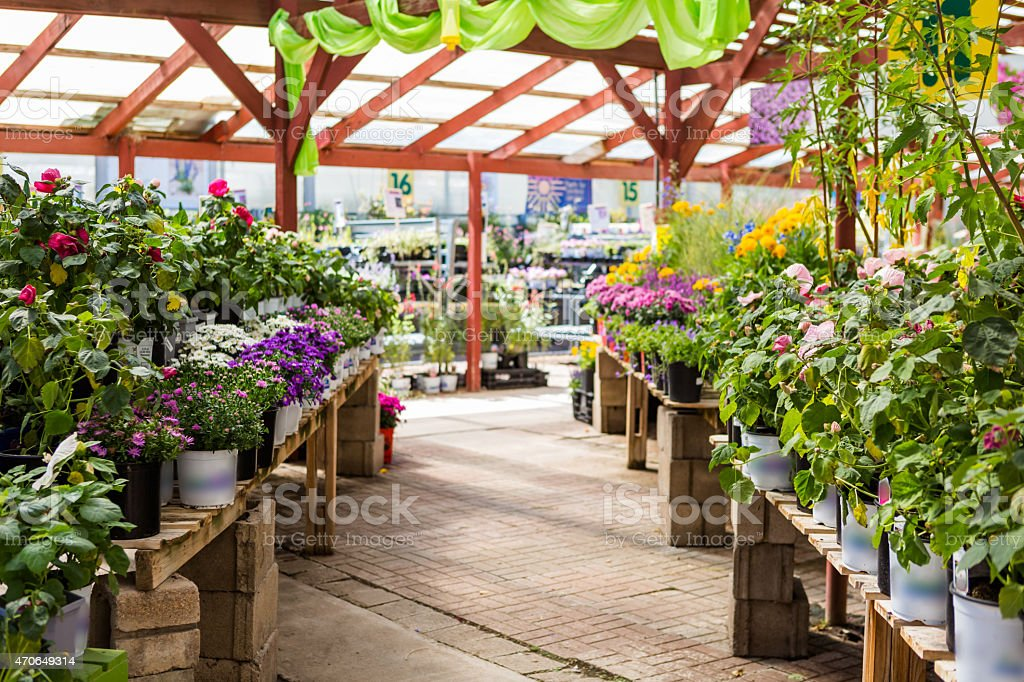 Nursery filled with various colorful flowers stock photo