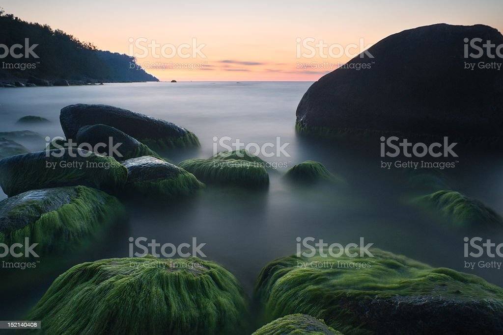 nursery for green royalty-free stock photo