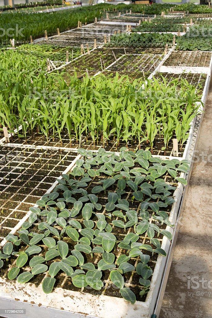 Nursery plants outdoors stock photo