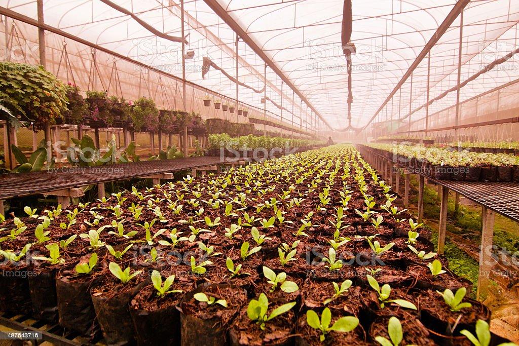 Nursery tree seedlings stock photo