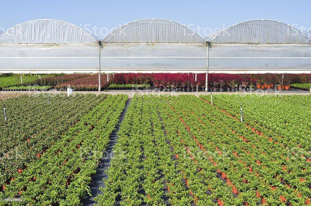 Nursery 、greenhouses ます。 ロイヤリティフリーストックフォト