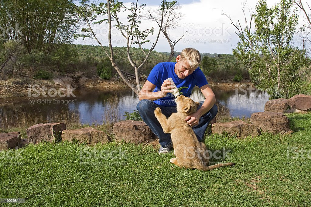 Nursing a Lion Cub with a bottle royalty-free stock photo
