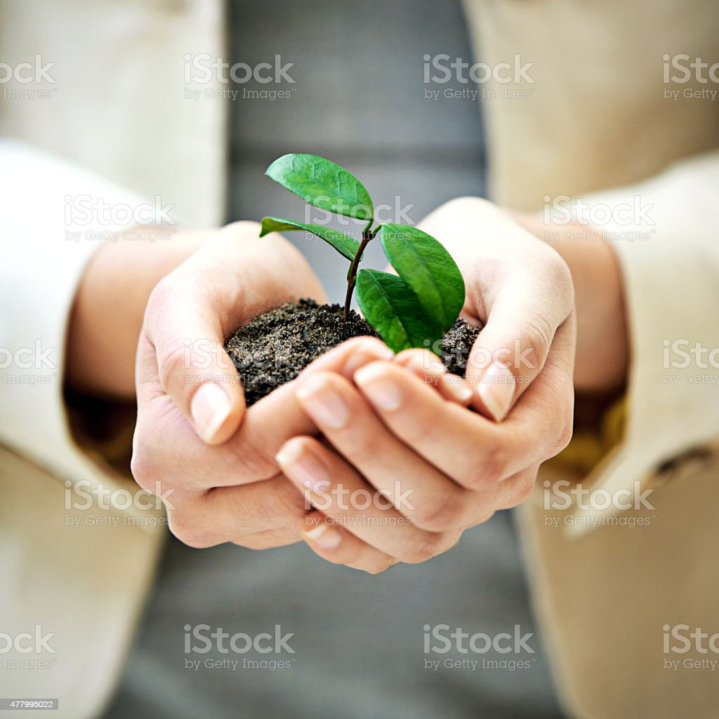 Nurture your business stock photo
