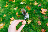 Nut for brown squirrel
