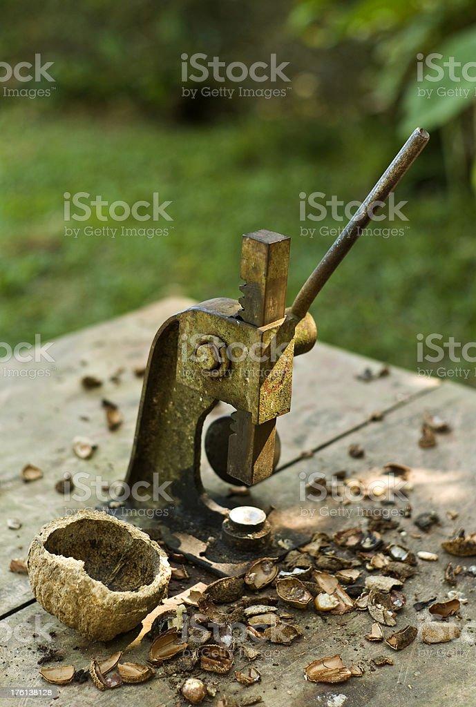 Nutcracker in Amazon royalty-free stock photo
