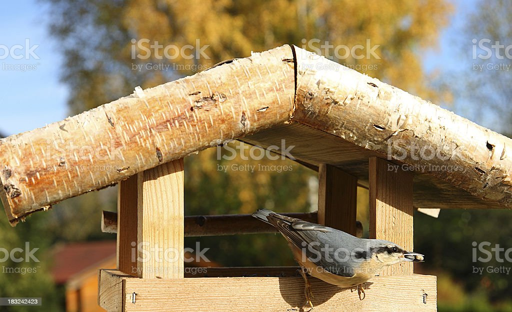 Nuthatch bird at birdhouse with seeds in beak royalty-free stock photo