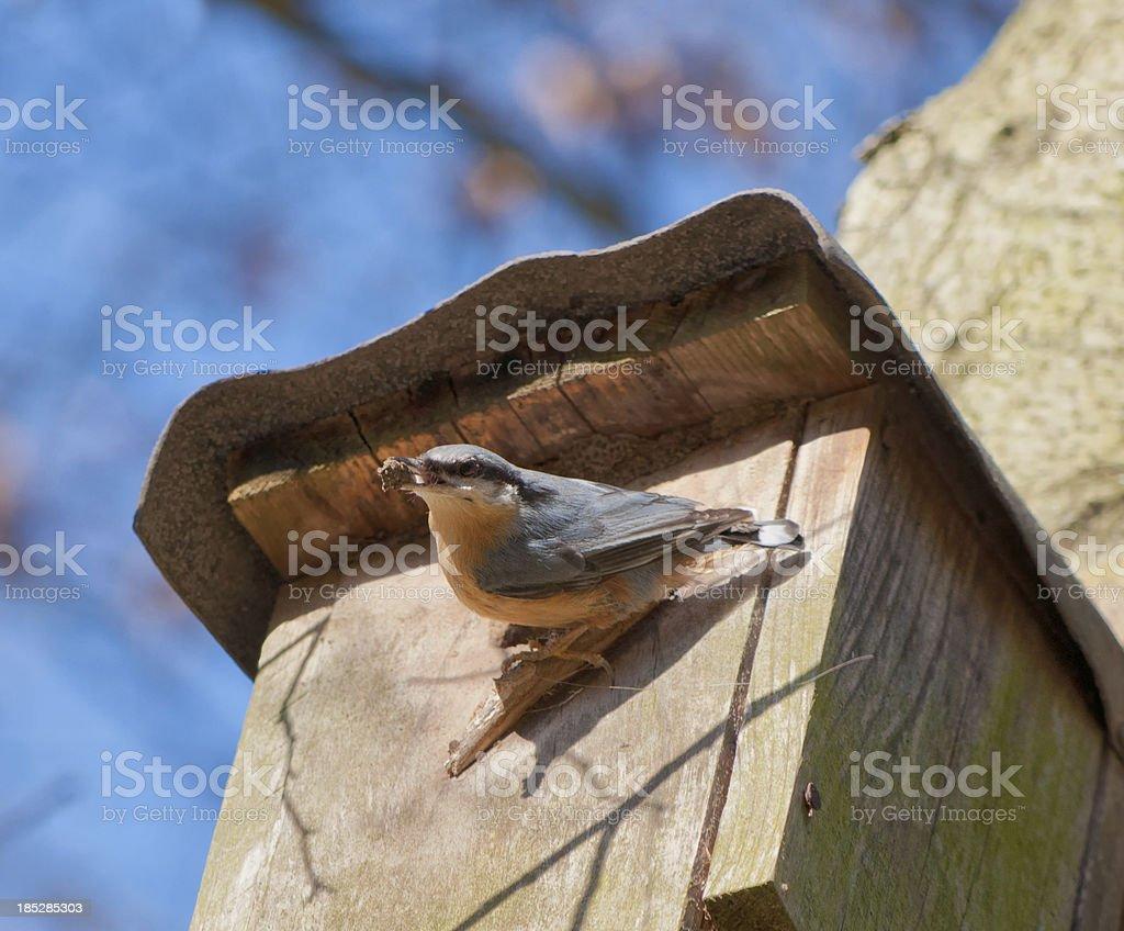 Nuthatch sitting on a birdhouse stock photo