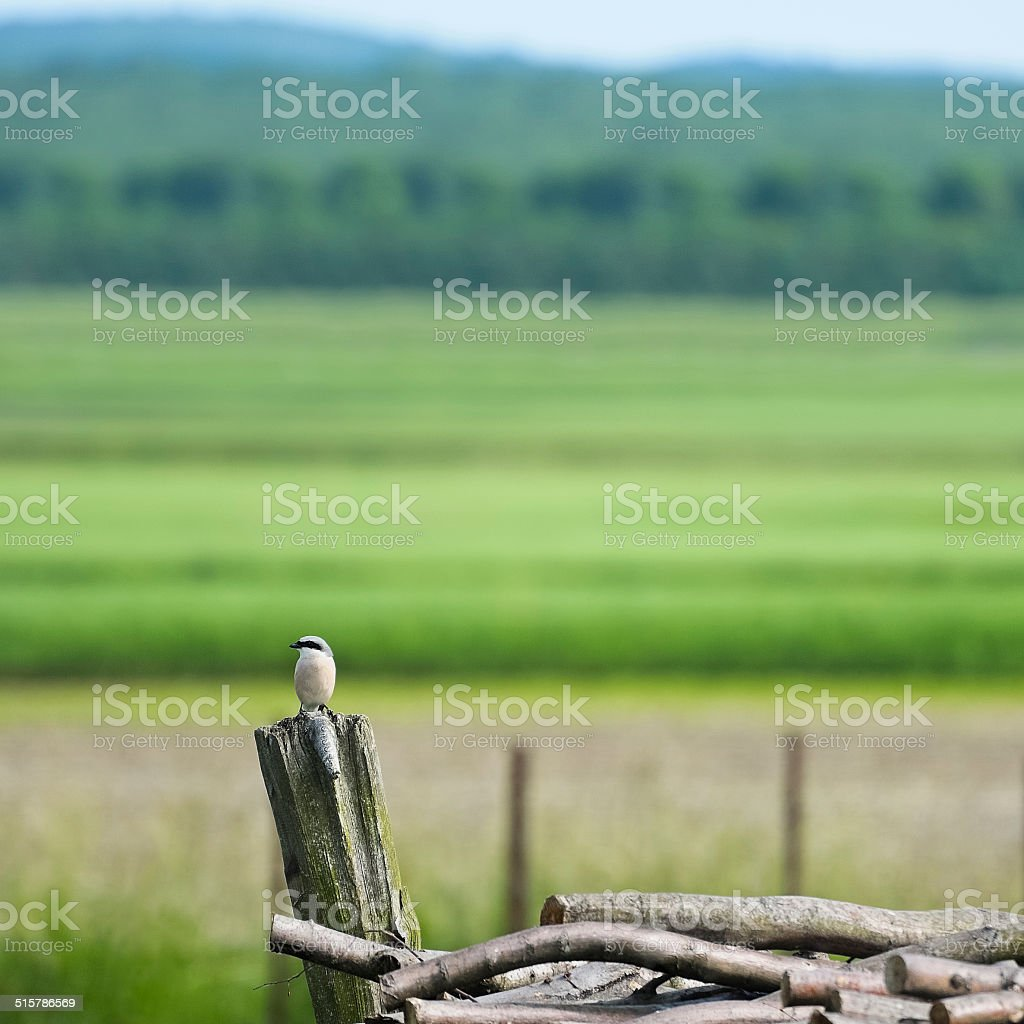 Nuthatch sitting on a tree trunk stock photo