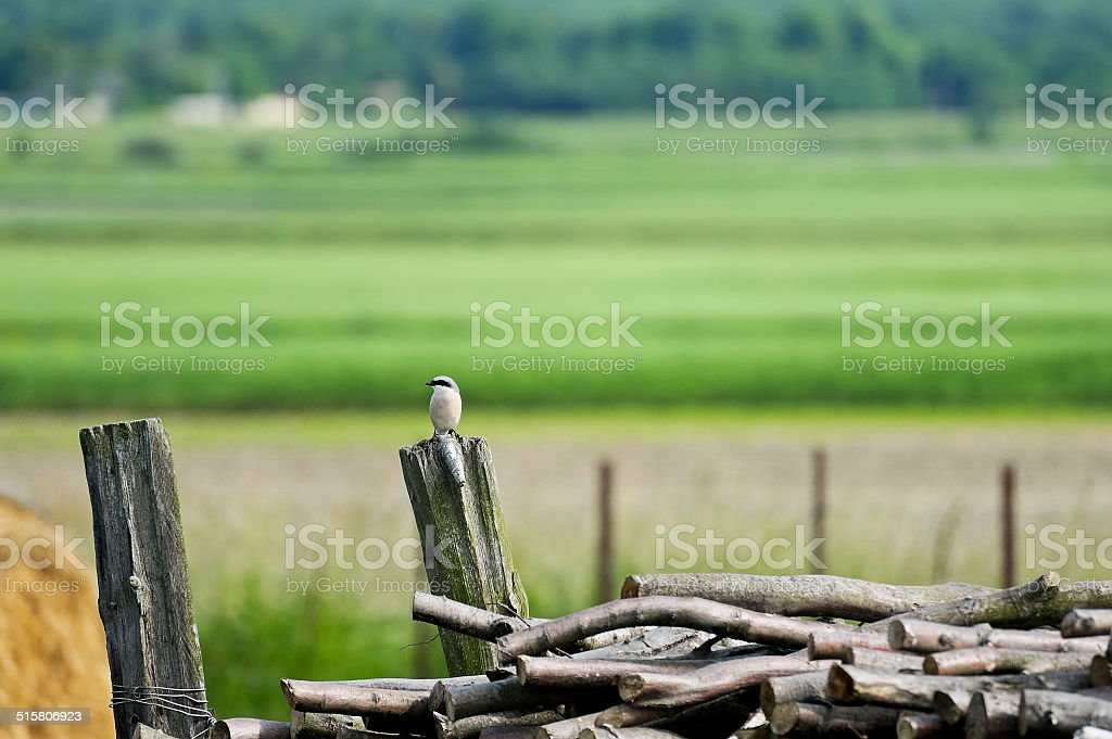 Nuthatch sitting on a trunk stock photo