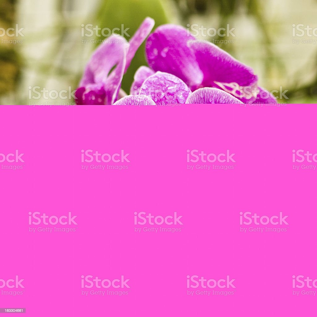 Nuts and nutcraker royalty-free stock photo