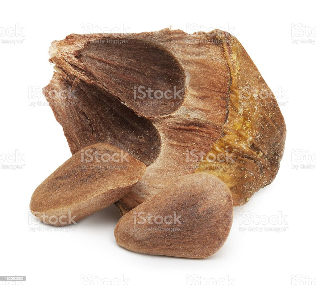 Nuts from cedar pine cone stock photo