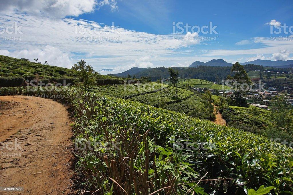 nuvaraelia, Sri Lanka, bush tea, Ceylon, stock photo