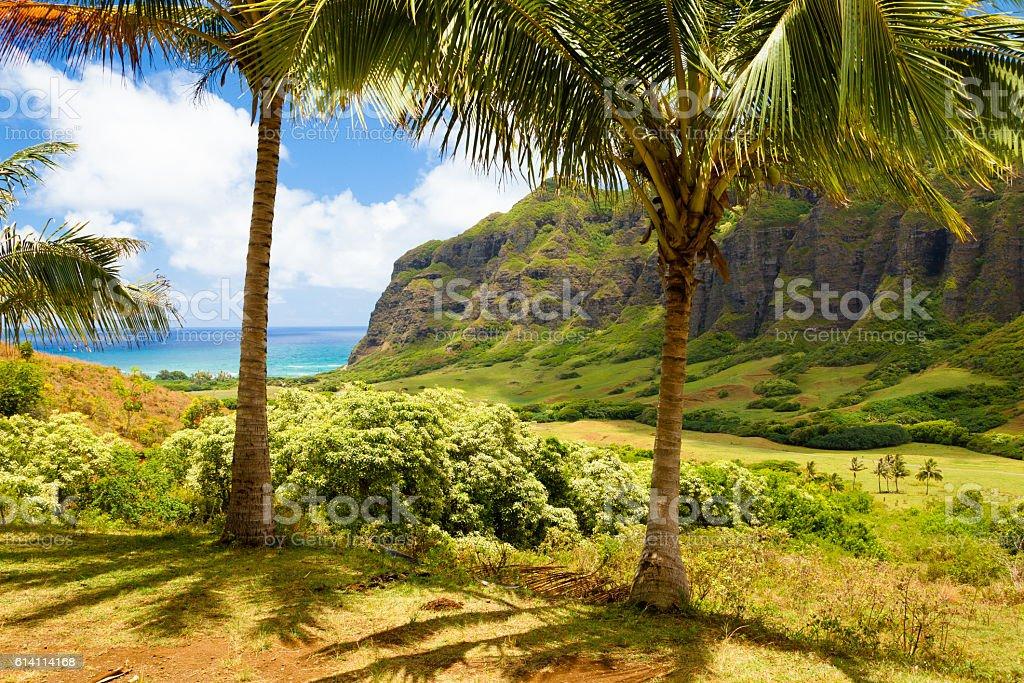 Oahu Hawaii 'Ka'a'awa Valley ' stock photo