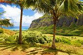 Oahu Hawaii 'Ka'a'awa Valley '