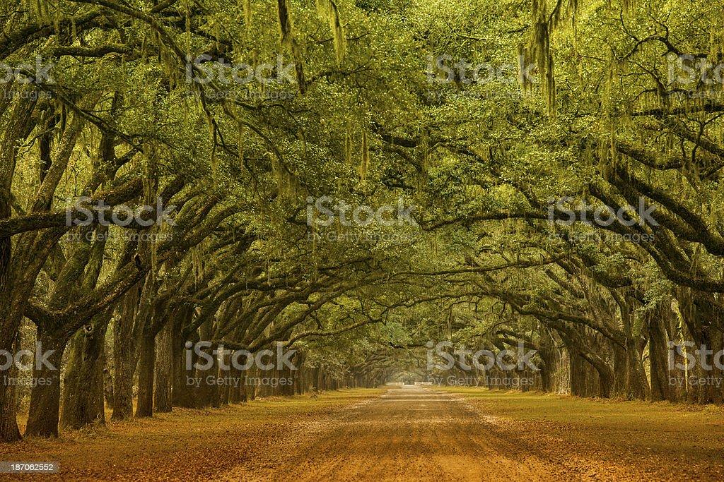 Oak alley in Savannah Georgia stock photo