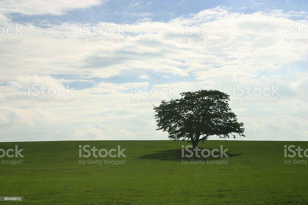oak alone in the fields royalty-free stock photo